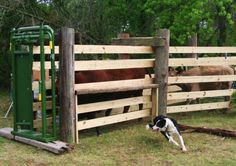 how+do+you+set+up+a+cattle+head+chute   With the occasional help of a Border Collie