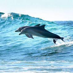Byron Bay dolphins, Australia