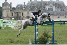 The ideal shot, event, jump - the ideal dappled gray