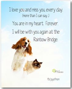 Dedicated to all fur babies.... who have gone to Heaven...