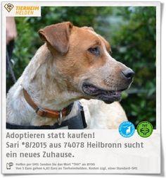 Sari wurde nicht gut versorgt und musste auf der Straße herumstreunen, um genug Nahrung zu finden, bevor sie ins Tierheim Heilbronn kam.  http://www.tierheimhelden.de/hund/tierheim-heilbronn/mischling/sari_*82015/12562-0/  Sari ist eine freundliche, friedliche Hündin mit gutem Nervenkostüm. Sie versteht sich gut mit Artgenossen und ist aufmerksam und verspielt. An der Leine geht sie auch prima.