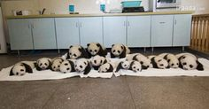 So in Love with Pandas! ♥