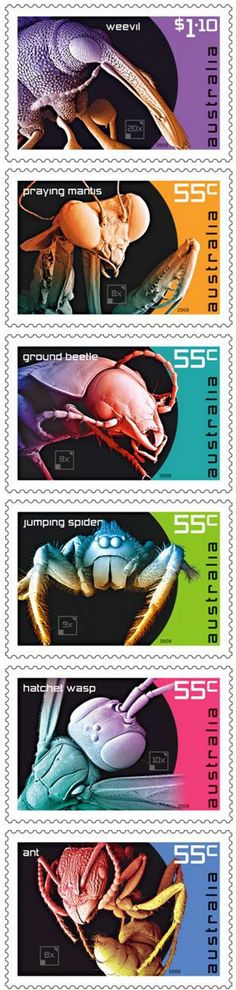 A series of stamps featuring scanning electron micrographs by the Museum's Sue Lindsay has been ranked among the world's best releases of 2009. -