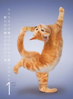 Japanese Photographer Captures Ninja Cats in Ameowzing Action Shots Silly Cats, Cute Kittens, Cats And Kittens, Funny Cats, Cute Baby Animals, Funny Animals, Animal Yoga, Dancing Cat, Cat Pose