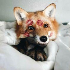 Foxy!!
