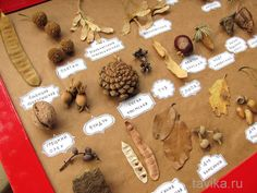 1 million+ Stunning Free Images to Use Anywhere Forest School Activities, Halloween Activities, Autumn Activities, Toddler Activities, Preschool Activities, Projects For Kids, Diy For Kids, Crafts For Kids, Autumn Crafts