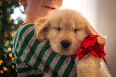 La Navidad puede ser un buen momento para que usted y su perro pasen un momento de verdadera calidad juntos, pero a los perros les encanta la rutina, y por lo tanto, lo que es divertido para usted puede terminar