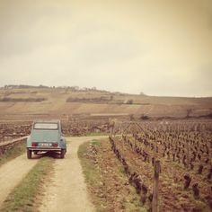 Beaune, Bourgogne, France. Wine tasting in small vineyards in Provence and Bourgogne.