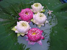 18 best thailand 3 images on pinterest thailand bangkok and thai lotus flowers mightylinksfo