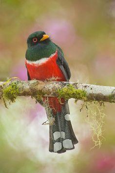 Photographer Captures CloseUp Of FieryThroated Hummingbirds - Photographer captures amazing close up photos of hummingbirds iridescent feathers