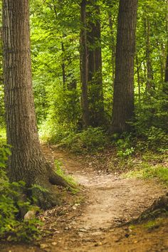 Browse through our collection of forest images and forest pictures. High quality pictures of forest and images of forest. All forest photos are royalty free. Forest Trail, Forest Path, Tree Forest, Forest Scenery, Forest Road, Forest Pictures, Nature Pictures, Forest Bathing, Beautiful Forest
