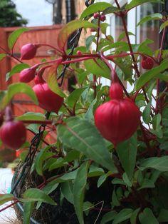 Stuffed Peppers, Fruit, Vegetables, Garden, Flowers, Food, Garten, Stuffed Pepper, Lawn And Garden
