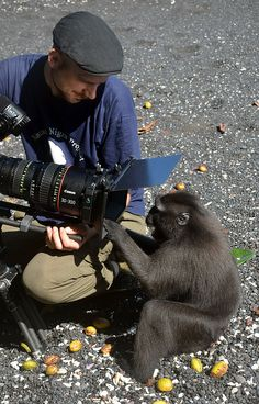 Crested black macaque exploring a fancy camera lens | Flickr - Photo Sharing!