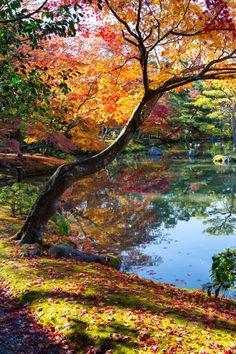 Autumn in Kyoto & Osaka, Japan