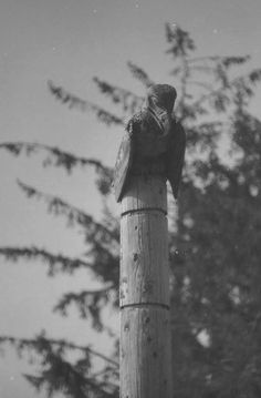 Close up of the eagle on top of the beaver Memorial pole in the village of Skidegate, the pole was erected in honor of Jane Shakespeare. A Beaver is at the base, with a smaller beaver between the ears, in the middle are 10 potlatch cylanders, and an eagle at the top peering down. This pole was erected in 1882 and was the last standing pole in Skidegate Village. It now is now housed in the Haida Heritage Centre at Kaay Llnagaay