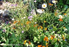 wildblumen für wildbienen