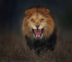 Photographers sure have guts. Atif Saeed is a nature photographer in Pakistan and had quite the run-in with a lion who really wasn't in the mood to be photographed that day. While photographing animals at a safari zoo park near Lahore, Saeed came across a beautiful lion he just had to photograph and risk his […]