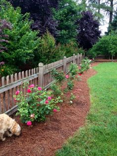 rose garden along back fence just like this