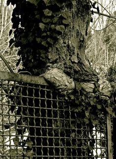 albero e ringhiera 2