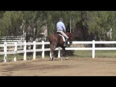 Correct leg aids to engage the horse's back - YouTube