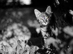 Cat Eyes by maxrastello