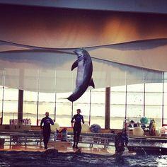 Visit the National Aquarium in Baltimore