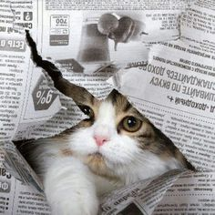 """One reason cats are happier than people is that they have no newspapers."" --Gwendolyn Brooks"