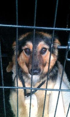 Date Found:Jun 29, 2013  Found Location: (Range Road 21) Red Deer County, Alberta, Canada Found Notes:Dog is not wearing a collar or tags, and does not have a tattoo or microchip.  WT: 16.9KG  Found on Range Road 21, Red Deer County, AB. If You Have Lost This Pet Contact:  Alberta Animal Services Alberta Animal Services Email: info@albertaanimalservices.ca Phone: 1 (866) 340-2388 Shelter Reference #: 30052