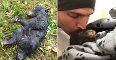 Man Finds Dying Baby Bear While Out Hiking, Risks Jail-Time To Save Its Life!