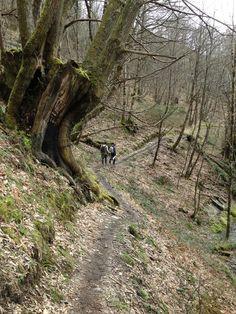 Haciendo el camino, ruta a la cascada Seimeira, Oscos, #Asturias ENCANTADOR Y PRIMITIVO