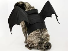 Transform your sweet dog into a winged creature of the night with this DIY bat wing costume.