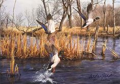wildlife artists prints | Blackwater Mallards Duck Bird Wildlife Wilderness Art Print Poster