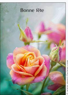 Carte Une belle rose pour envoyer par La Poste, sur Merci-Facteur !