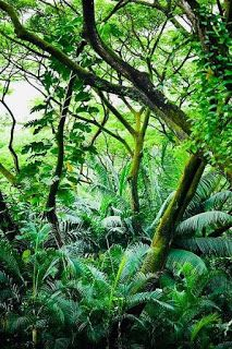 View Stock Photo of Tropical Rainforest. Find premium, high-resolution photos at Getty Images. Tropical Forest, Tropical Plants, Forest Photography, Ocean Photography, Photography Tips, Wedding Photography, Jungle Tree, Image Hd, Beautiful World
