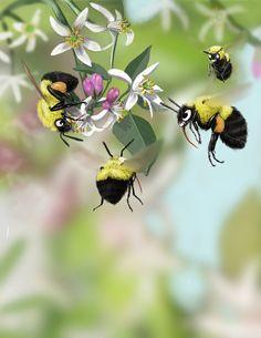 Lemon Trees & Bumble Bees