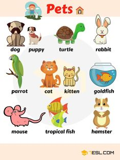 Everybody loves animals, keeping them as pets, seeing them at the zoo or visiting a farm…There are more than just humans as animals that inhabit this earth… Pets Vocabulary Learn useful pet names, pets vocabulary in English. Farm Animals Vocabulary Farm and Domestic Animals Vocabulary Birds Vocabulary Birds are a group of endothermic vertebrates, characterised by feathers, toothless beaked jaws, the...