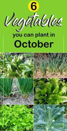 Veggie gardens 556546466442827509 - The month of October is considered to be the best for planting vegetables. At this time the crop is cut and your fields are empty. Source by naturebring Growing Winter Vegetables, Growing Veggies, Growing Plants, Fall Planting Vegetables, Growing Tomatoes, Container Gardening Vegetables, Home Vegetable Garden, Fruit Garden, Veggie Gardens