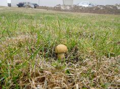 Mushroom Nano Micro Cache Geocache geocaching by naturalcaches4u, $5.99
