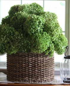 how to dry hydrngeas - take cut flowers fill vase 1/3 water and let water evaporate naturally