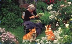 Tasha Tudor in her garden with her corgis