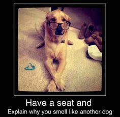 The Wise Labrador
