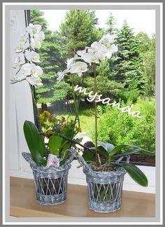 KVĚTINÁČEK orchidej