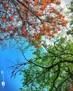 Vibrant #nature #tree #sky #colourful #mobileclick #mobileedit #shotoniphone #bilikal_betta #deepstudio www.deep.studio