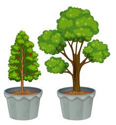 Topiary 1.7