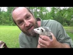 A quick video showing the new arrivals to the homestead: 12 baby possums! More videos coming. Baby Possum, Animal Welfare, Nature Animals, Livestock, Raising, Wildlife, Orphan, Pets, Youtube