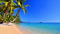 images of tropical beach from water | Palm Trees Near Sea Water On Tropical Beach Stock Footage Video ...