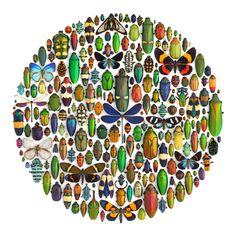 Mosaicos coloridos de Insectos -001