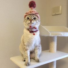 I don't think she likes her new hat.