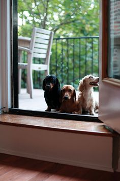 Our crackerjack, high security guard dogs.  We'll be alright as long as we don't have any intruders taller than a foot or two...
