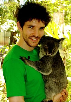 Colin Morgan with a koala. Best. Thing.ever. :) two adorable creatures!!!